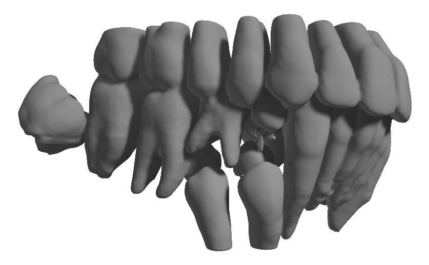 CephX-Teeth-Segmentation